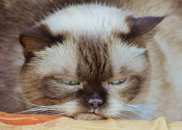 猫を不愛想と感じる理由